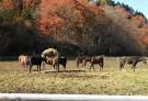 牝馬たちも集合