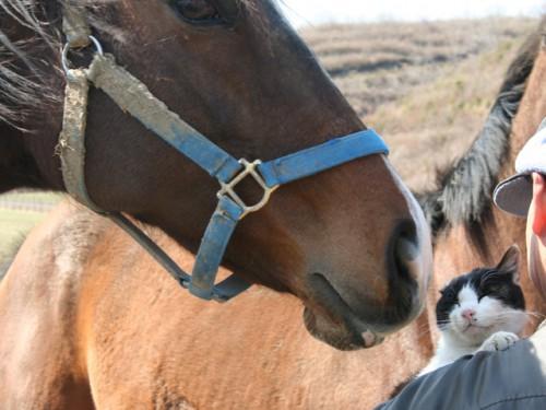 馬とも仲良し
