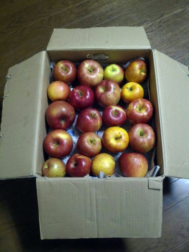 青森県T・S様よりリンゴをいただきました!