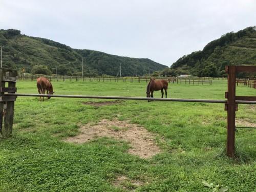 放牧中の馬たち