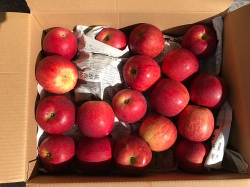 青森県のK・M様からりんごをいただきました!