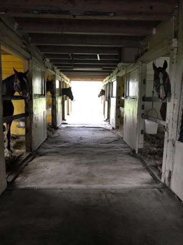 厩舎で過ごす馬たち