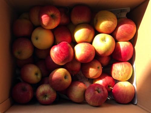 青森県のM・K様よりりんごを1箱いただきました。