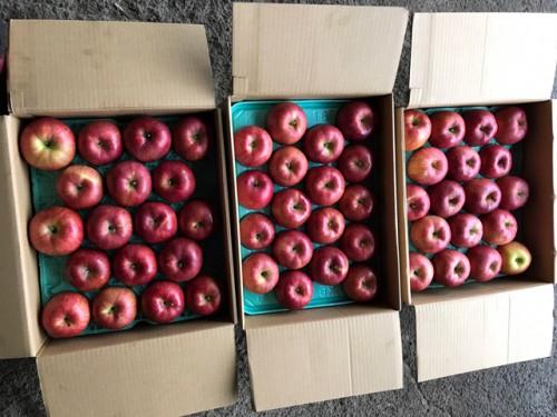 静岡県のU・O様よりりんごをいただきました!
