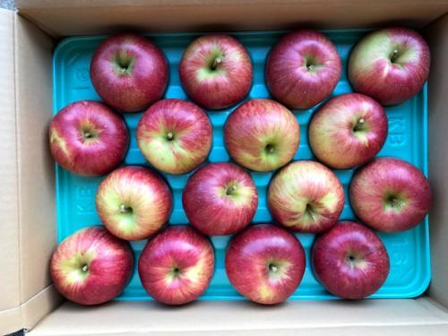 静岡県のK・O 様よりりんごをいただきました。