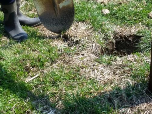 古い牧柵の穴