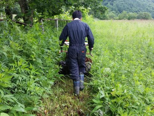 採草地を草刈り機で刈る