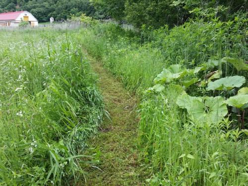 採草地1周目印の草刈完了