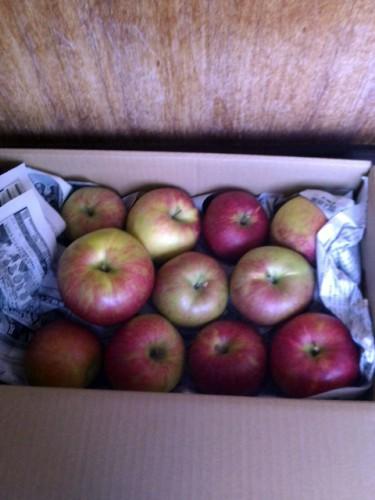 10/22熊本県のF・E様よりりんごをいただきました!