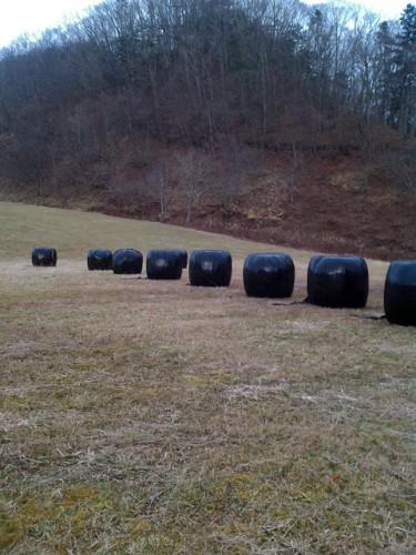 刈り取った牧草