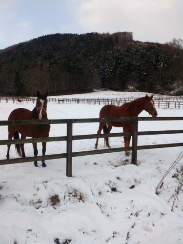 雪の放牧地