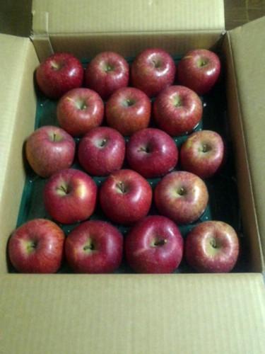 静岡県のY・O様よりりんごをいただきました。