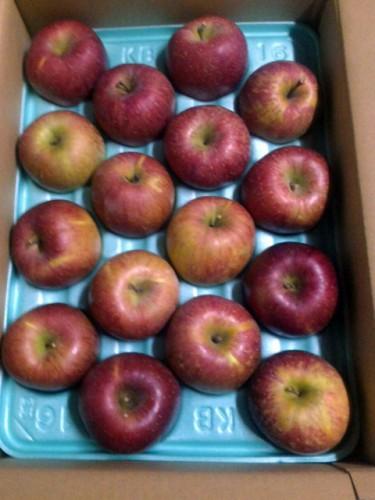 静岡県のK・O様よりりんごをいただきました。