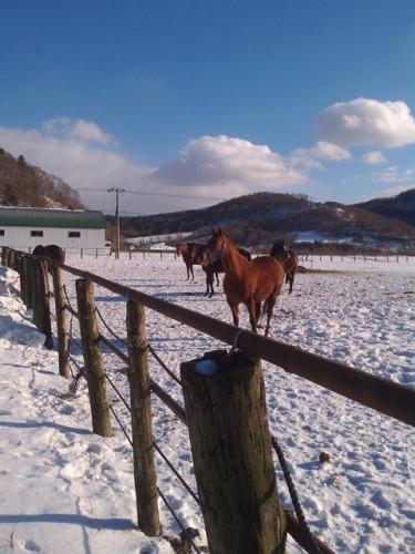 のんびり過ごす牝馬たち