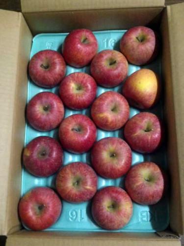 大阪府H・S様よりりんごをいただきました