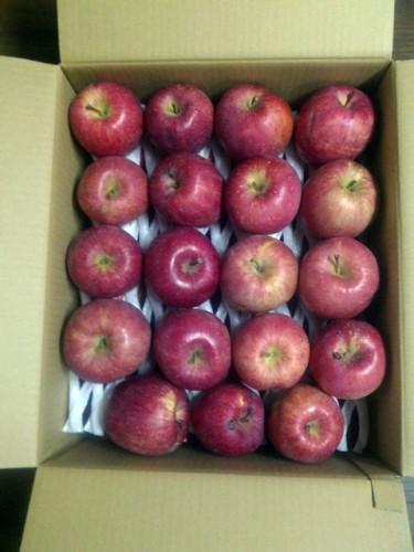 北海道のT・N様よりりんごをいただきました!
