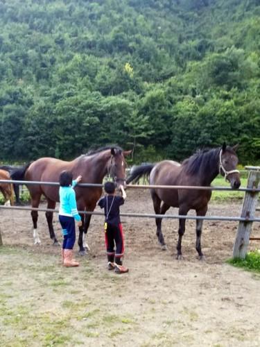 馬に触れる子ども達