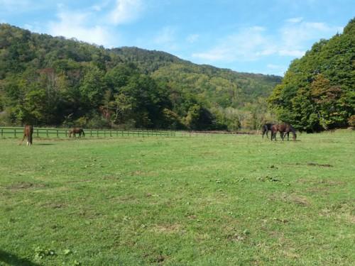 4頭の新しい放牧地