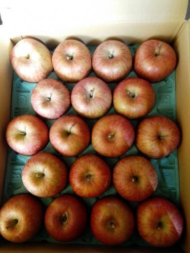 佐賀県のM・K様よりりんごをいただきました!