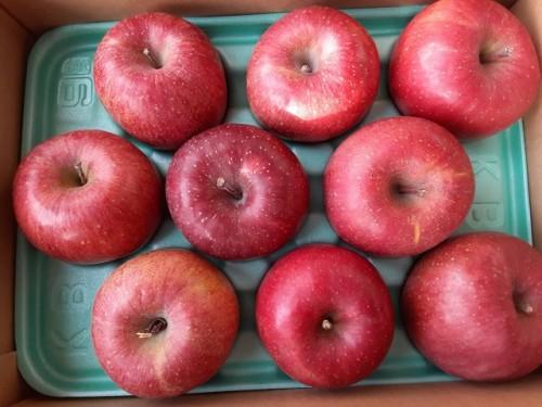 静岡県のK・O様よりりんごをいただきました!