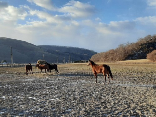 牝馬放牧地2