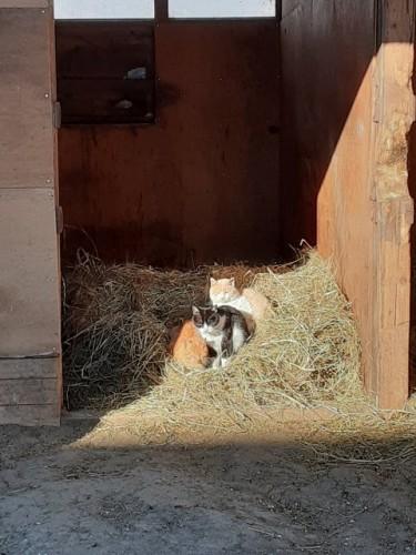集まって暖をとっている猫たち
