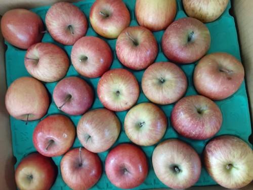 北海道簿S・S様よりりんごをいただきました!