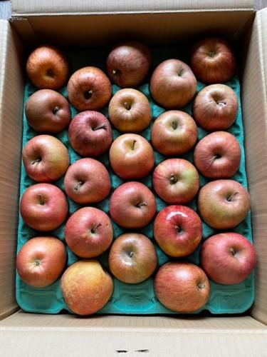 神奈川県のY・I様よりりんごをいただきました!