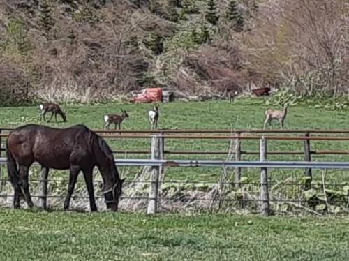 馬と鹿(アップ)