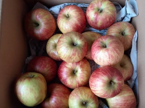 /23北海道のS・S様よりりんごをいただきました!